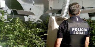 Policía, plantación marihuana